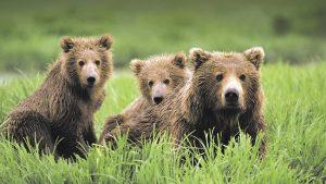 226329-bear-market