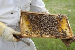 bea-keeping-honey